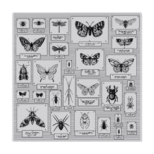Hero Arts Cling Stamp - Bug Collection
